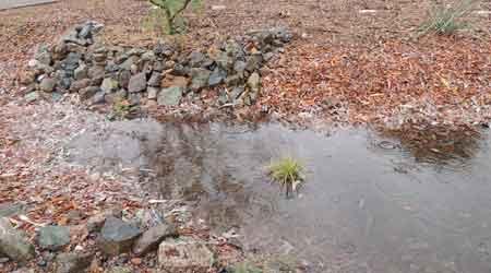2. Reduce, Reuse, Repurpose Water
