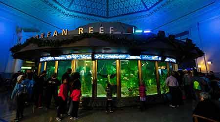 Analytics System Halves Energy Use at Shedd Aquarium in ...