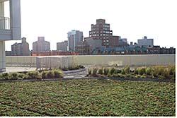 Modular Roof Garden: Carlisle SynTec