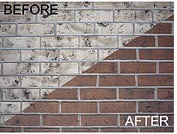 Staining Process: BrickImaging Inc.