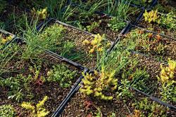 Vegetative Roof: Mule-Hide Products Co. Inc.
