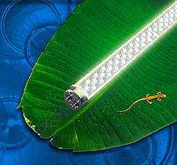 T8 LED: LEDtronics Inc.