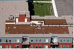 Vegetative Roof System: Firestone Building Products Co.