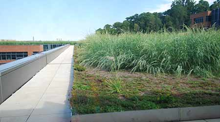 Green Roof Key Component to Coast Guard's Sustainability Efforts