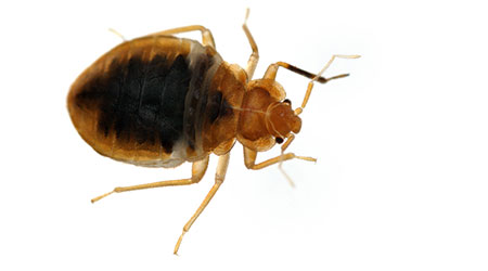 Cool Bed Bugs In The Office Warning Signs Precautions And Home Interior And Landscaping Spoatsignezvosmurscom