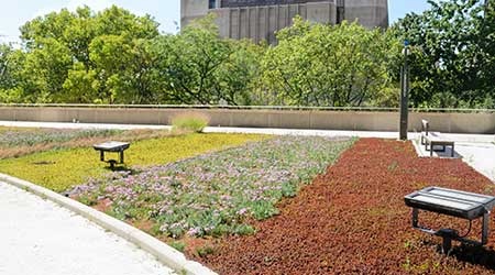 Green roof on urban building.