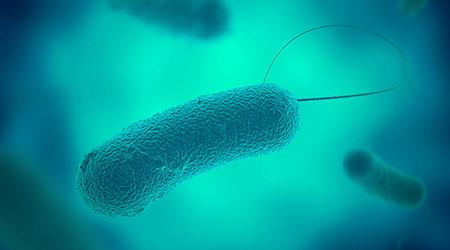 legionella germs