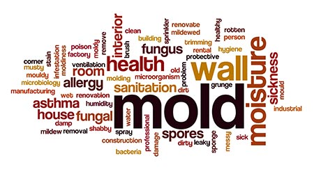 Mold word cloud