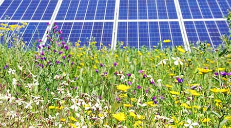 Solar panels with field of wildflowers in front