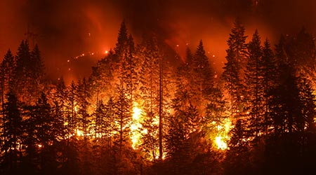 View of fire in the forest, smoke over the forest