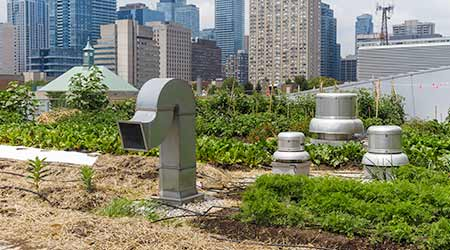 Urban roof with extensive planting and air intake and exhaust equipment