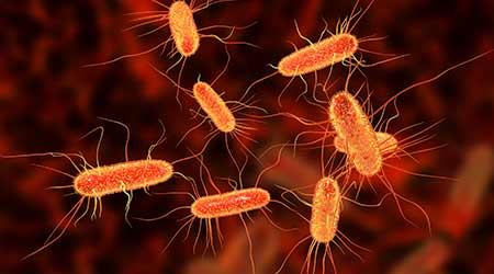 Escherichia coli bacterium, E.coli