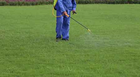 Worker spraying insecticides