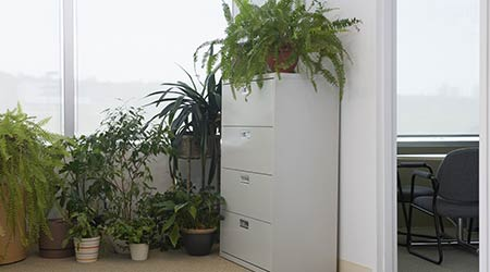 Bunch of potted plants by filing cabinet.