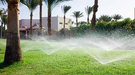 Automatic lawn sprinklers on lawn with palm trees.