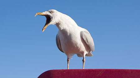Seagull with beak open perched on a red platform against a blue sky