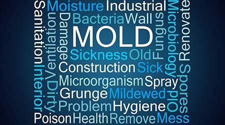 Mold Word Cloud