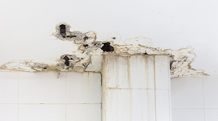 White ceiling damaged by moisture and mold