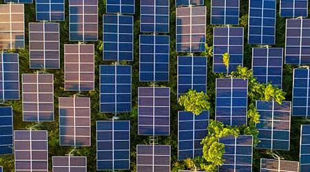 solar panels trees