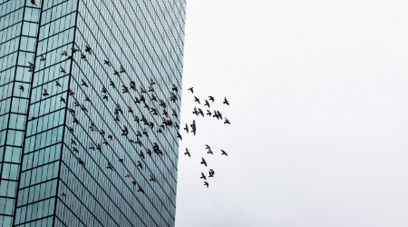 birds and a building